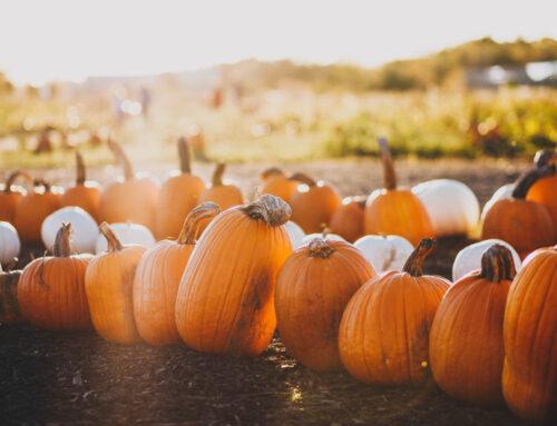 Menù di Halloween: idee da paura!